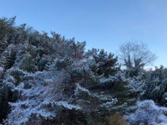 厄払いの日は雪